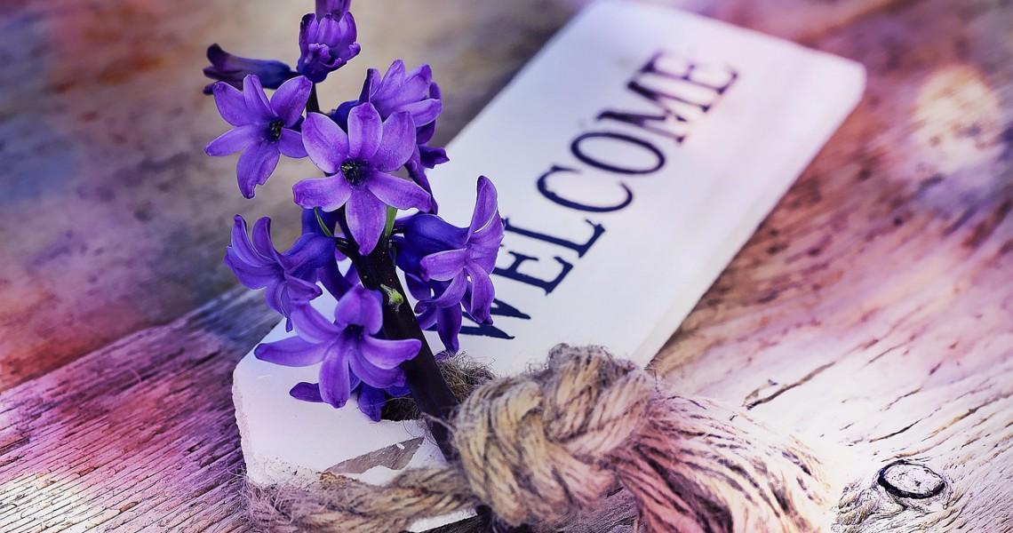 hyacinth-773384_1280