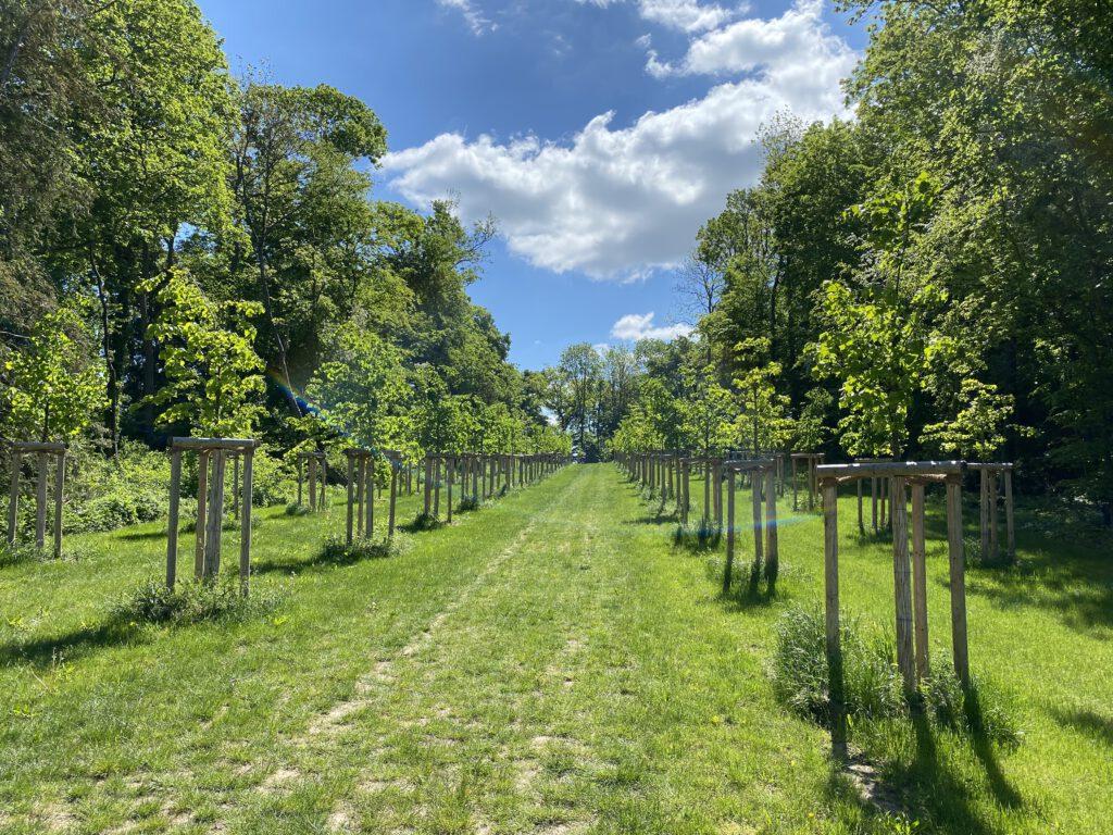 Rittergut Kissenbrück – die Lindenallee